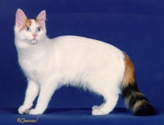 Koty Kot Van I Sfinx