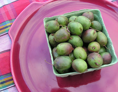Hardy kiwi fruit, the size of large grapes