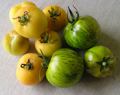 Garden Peach and Green Zebra Tomatoes