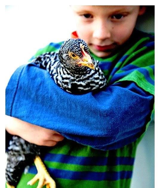 Backyard Farming: Backyard Chickens 101: Part One