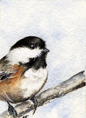 watercolour chickadee painting