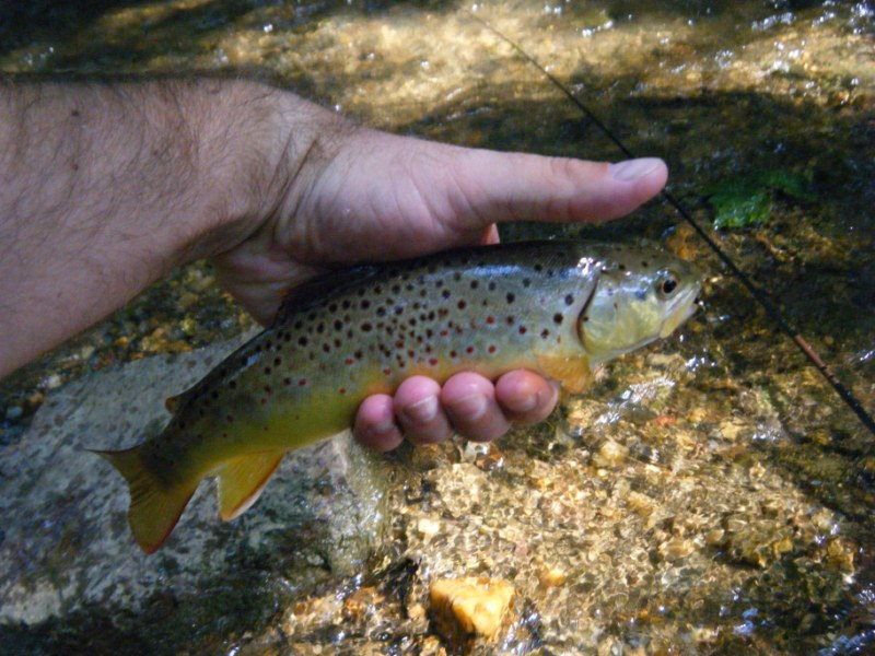 7f1adb508be Chunky Valley Forge National Historical Park Wild Brown Trout