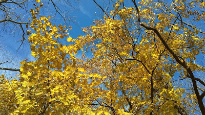 fall leaves blue sky