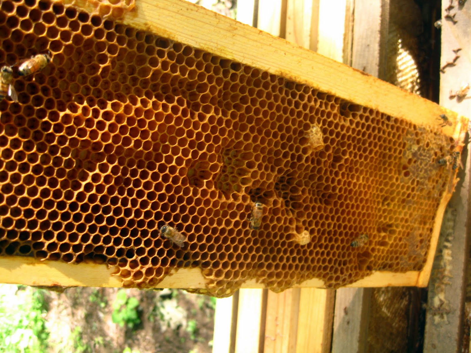 Bee Hive Placement Crate Proper Hive Spacing
