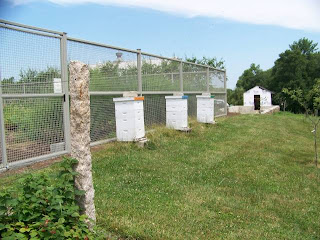 Linda S Bees How Does Martha Stewart Keep Her Beehives So White