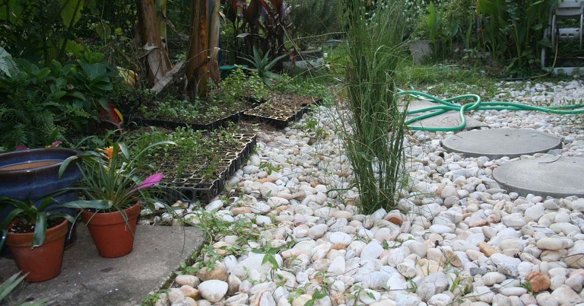 Florida Green Amp Sustainable Bmps Horsetail Inline