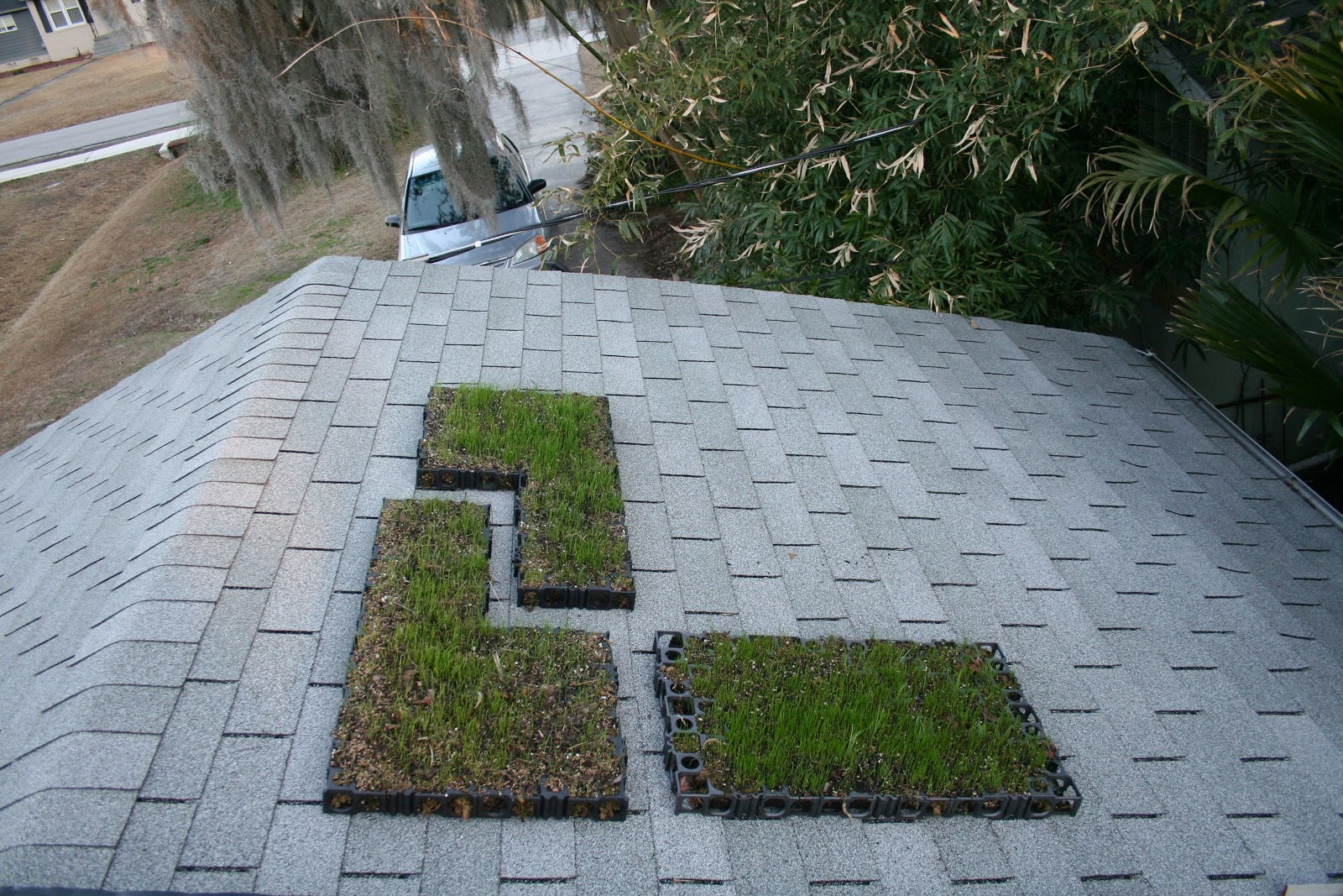 Kevin Songer Wheat Grass Green Roof Modules And Feeding