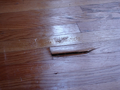 dog pee on wood floor