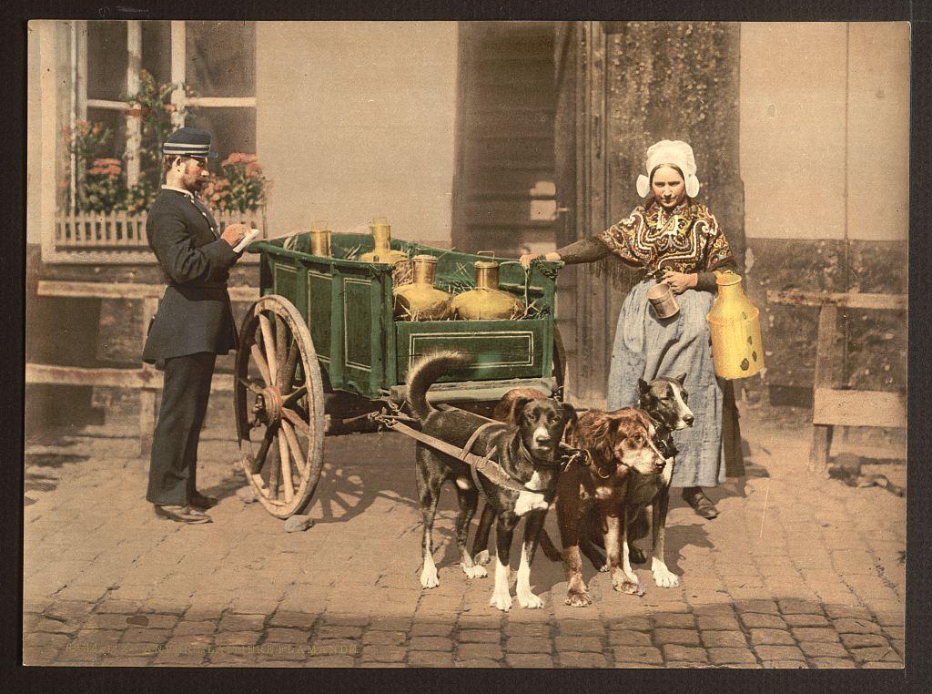 Vintage Photos Of Dogs Pulling Carts Sweet Juniper Inspiration