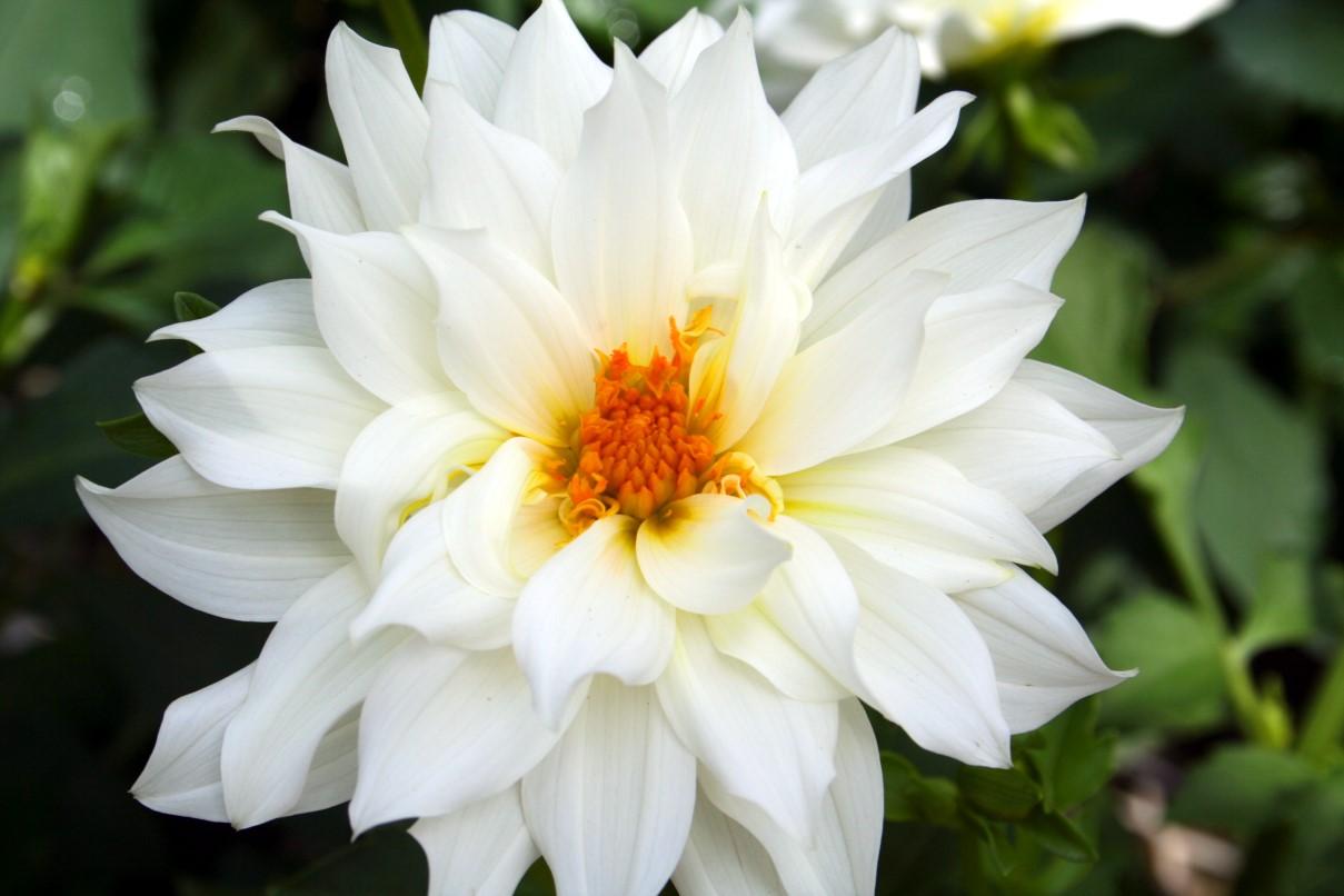 daffodil type flowers