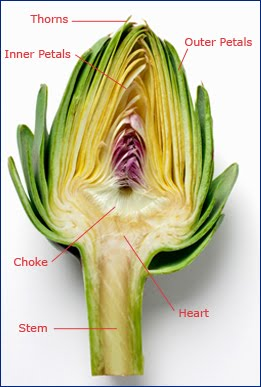 how to choose an artichoke