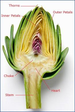 which part of an artichoke do you eat the garden of eaden