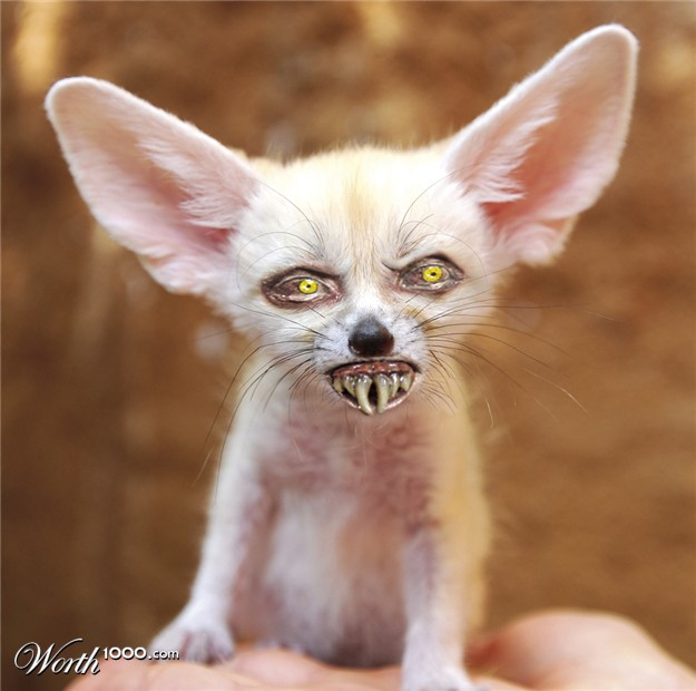 Fennec Fox Pet So Cute