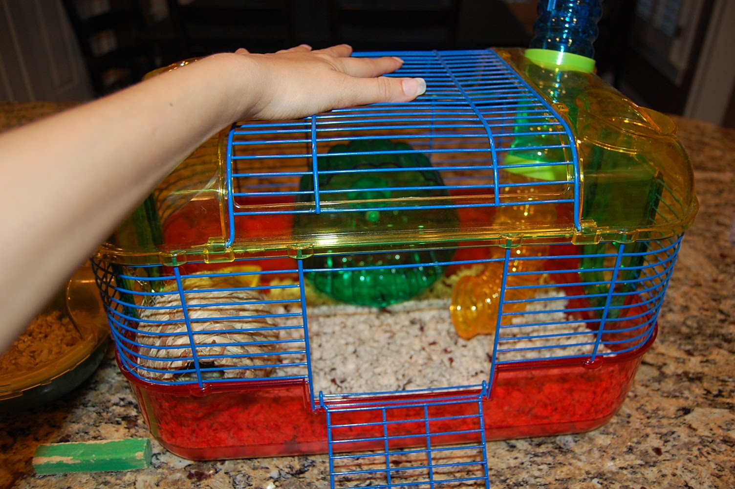 Ashley Glanzer Photography How To Clean A Hamster S Cage