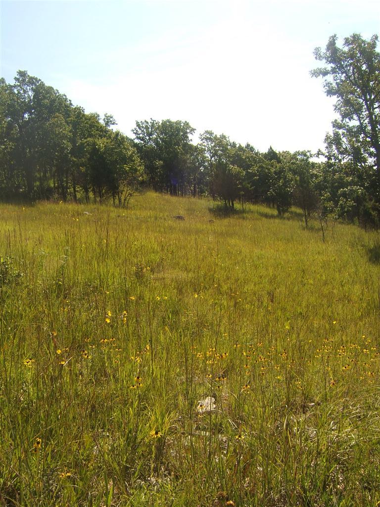 Ozark Highlands Of Missouri: August 2010
