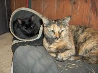 Missouri Barn Cat