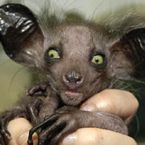 ~FaBuLoUshe~: top ten Ugliest Creatures!!!!