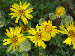 will tetracycline help urinary tract infection