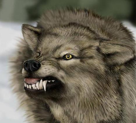 angry grey wolf - photo #4
