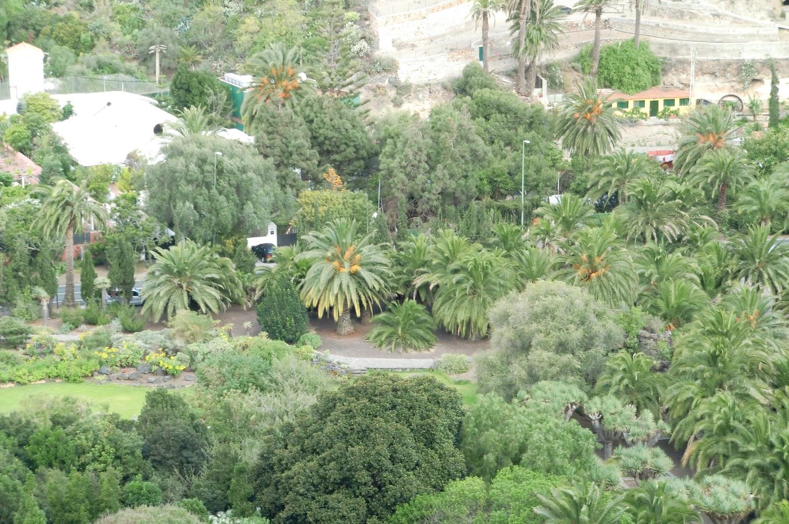 Black and white photography jardin botanico viera y - Jardin botanico las palmas ...