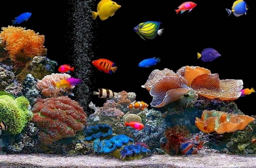 acquario per desktop