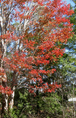 Florida S Arbor Day Third Friday In January