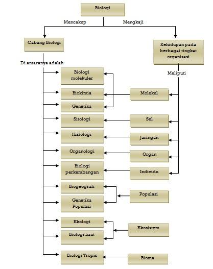 Taksonomi adalah sebuah cabang ilmu biologi yang mempelajari tentang klasifikasi. BIOLOGY FINAL TEST: Biologi Sebagai Ilmu (Bab 1)