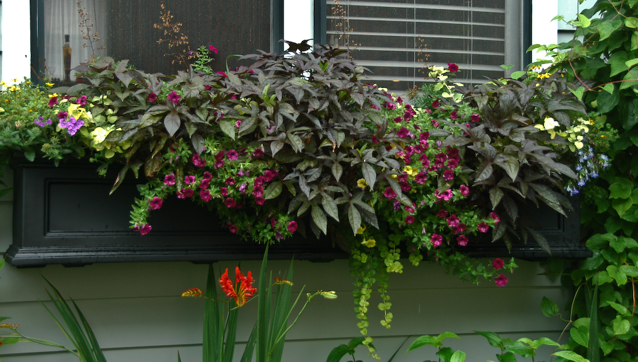 Garden Walk Buffalo Cottage District 5: Natural Gardening: More Buffalo Gardens