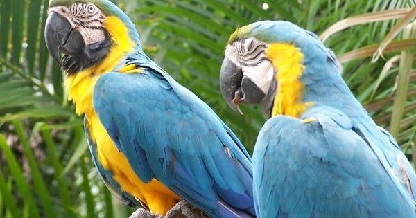 Pet Stores Guide Types Of Parrots
