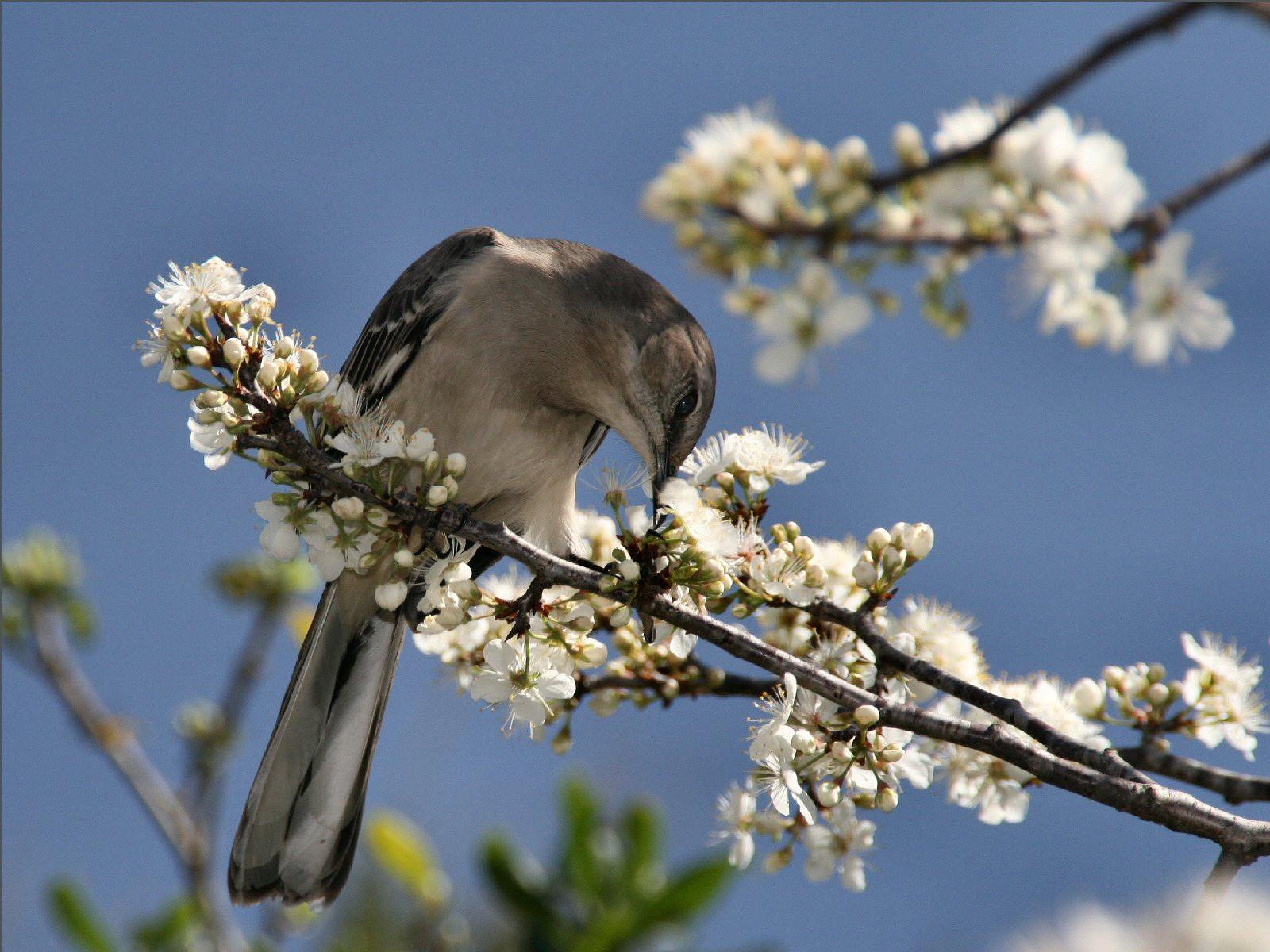 lente achtergronden hd - photo #43