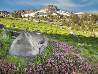 Lente achtergrond met rotsen en bloemen