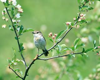 Vogel in de groene lente