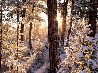 Winter achtergrond met bos en bomen