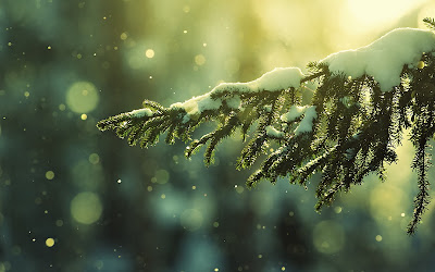 Winter achtergrond met dennenboom met sneeuw