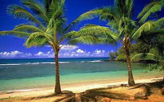 Strand en palmbomen in de zomer
