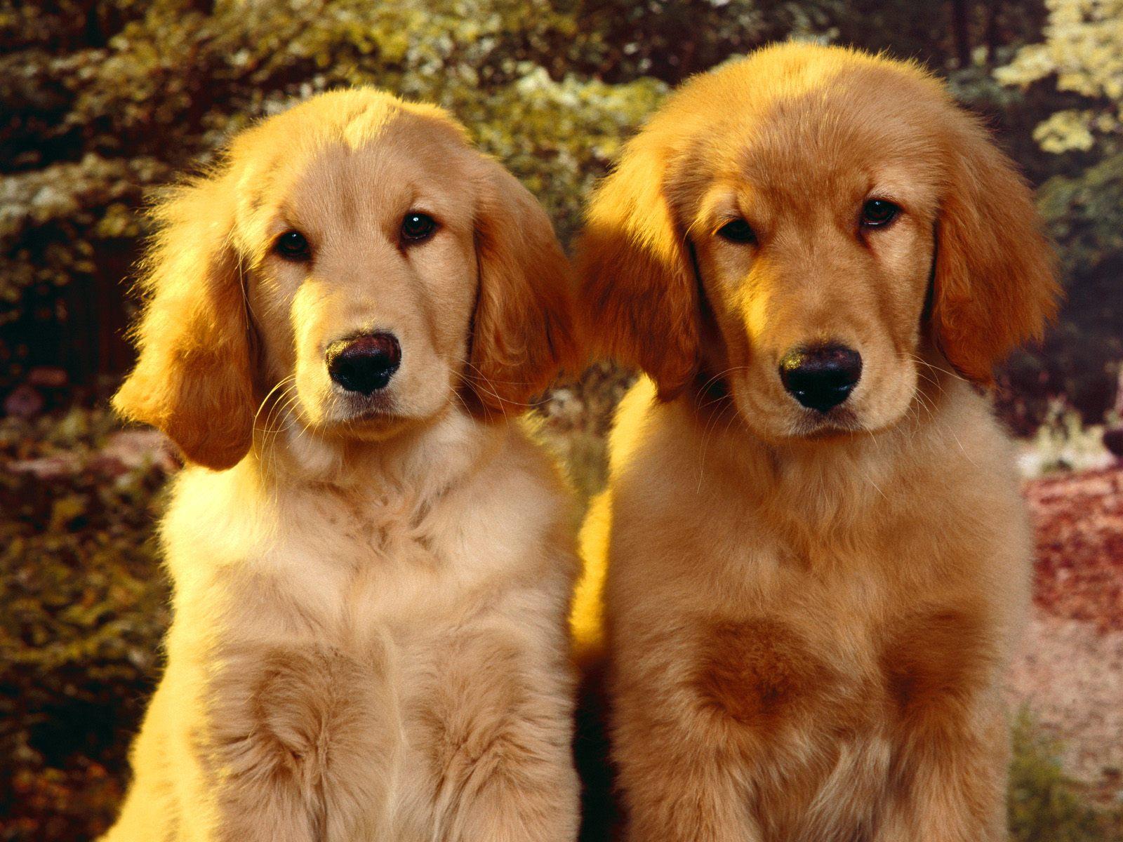 honden achtergronden hd wallpapers - photo #12