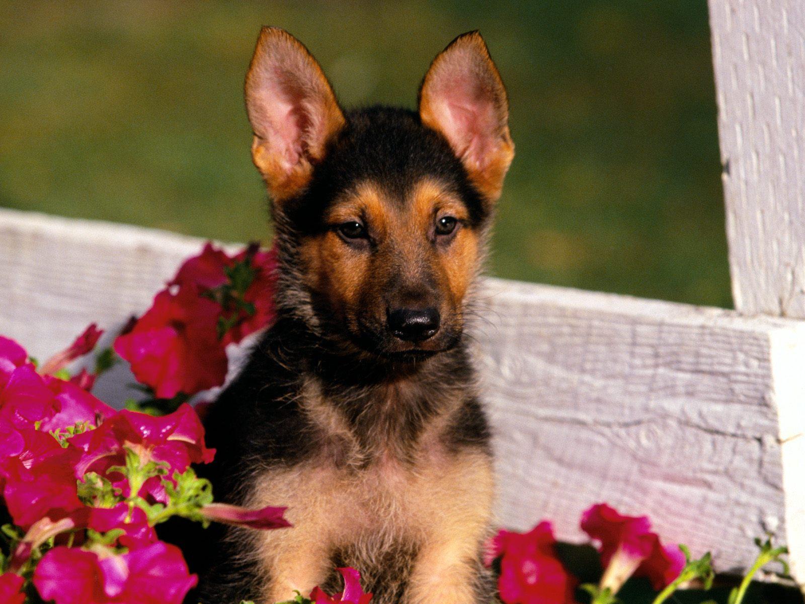 Honden wallpaper: Hele...