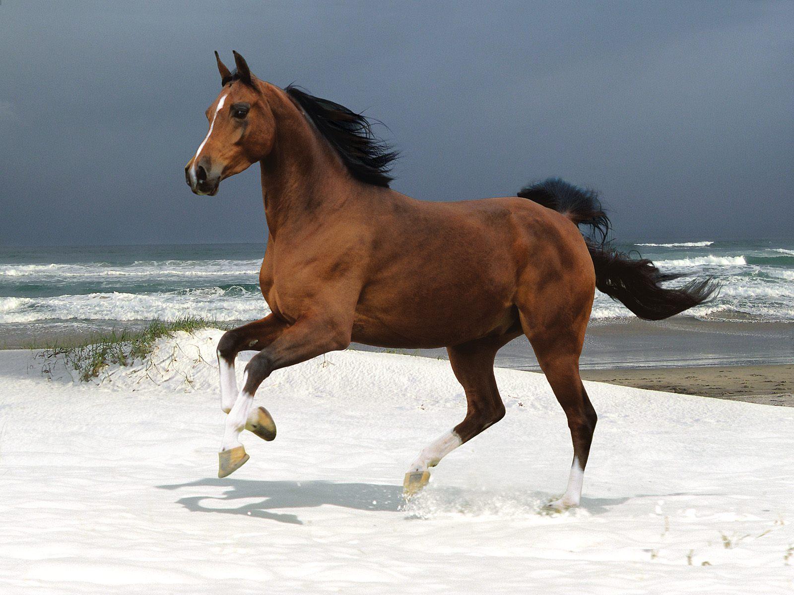 Paarden Achtergronden  HD Wallpapers