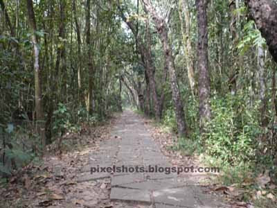 kumarakom bird sanctuary,inside bird sanctuary of kumarakom,kerala mangroves,south indian bird sanctuaries
