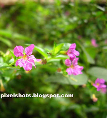 violet flowers,cannon a530 digital camera sample pictures,flowers in gardens of kerala state