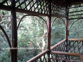 inside a tree house,view from inside tree house,house on tree from kerala forests,tree house made of canes and bamboos