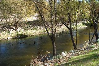 ¿Donde están los patos del Manzanares?