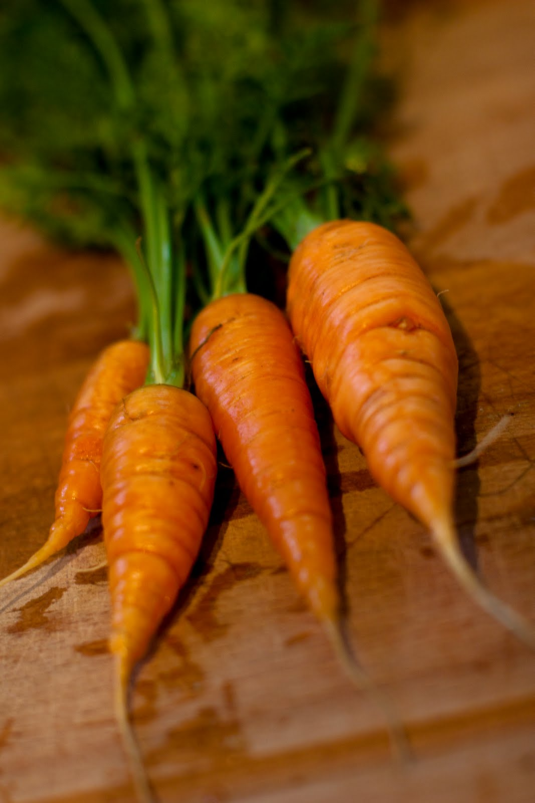 Photo Quiz Answers   Carrots, Questions, And Exciting Stuff
