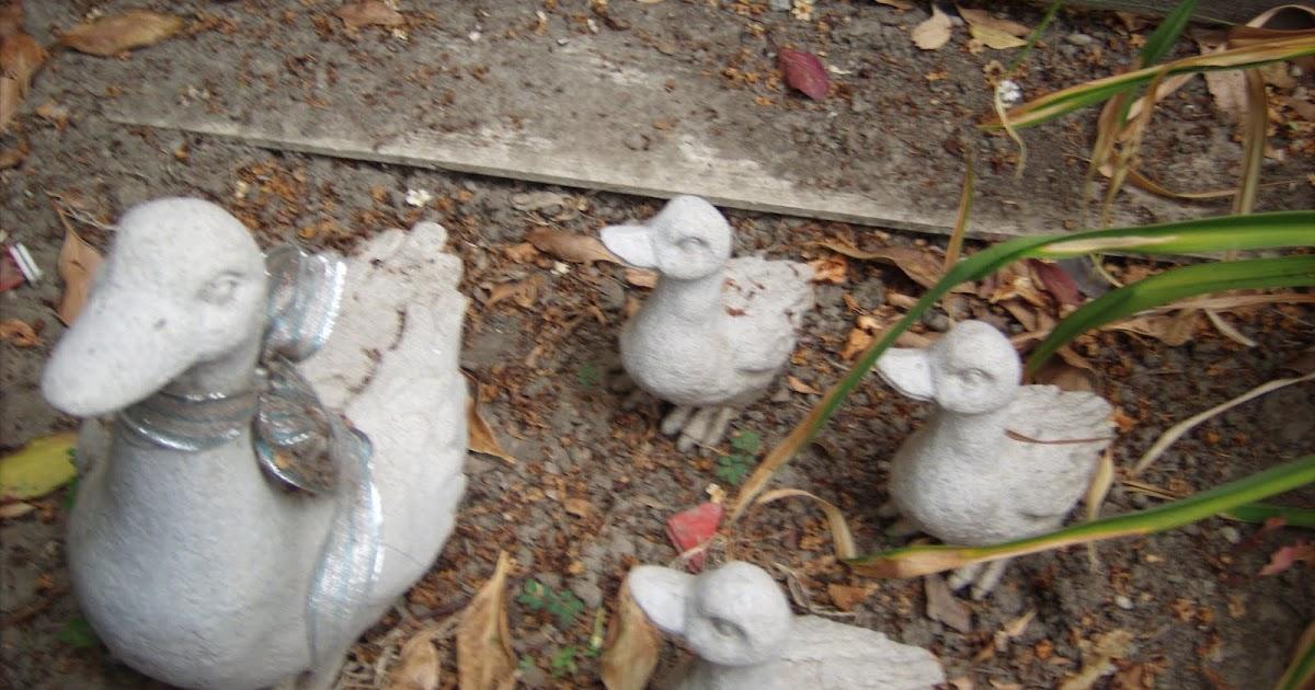 My Garden Room: Skunk Proofing the yard