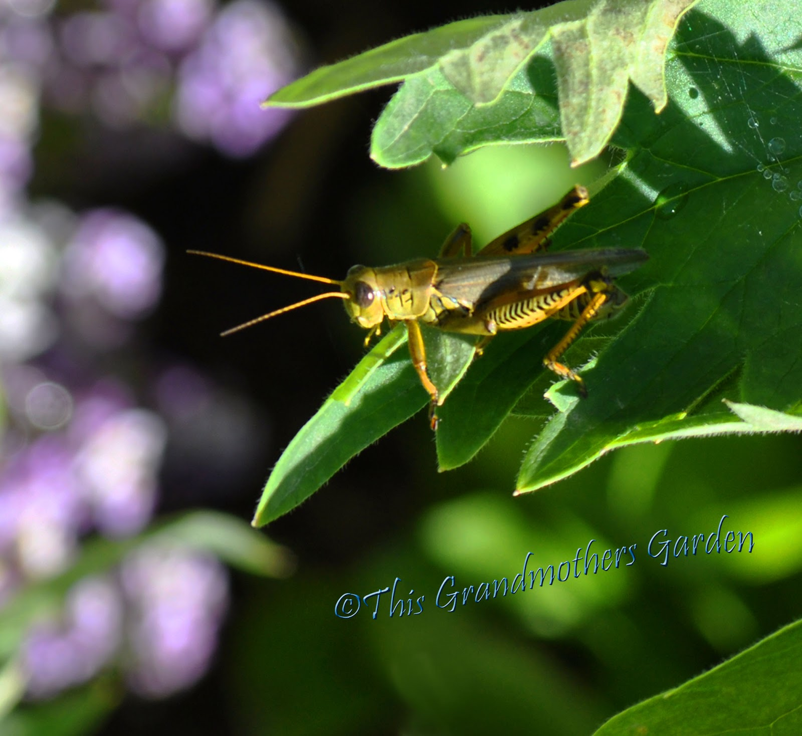 This Grandmother S Garden The Grasshopper And The Ant