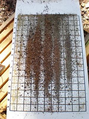 bee, beekeeping, checkerboarding, counting board, debris, hive, ipm, open the brood nest, swarm, swarm control, varroa, winter cluster,