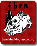 Adopt a Frenchie at