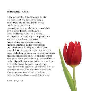 que significan los tulipanes
