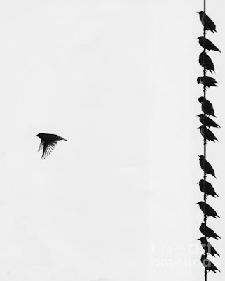 Coelha Thoughts: Black birds sitting on the telephone wire..