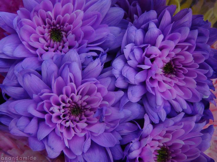 Best Favorite Flowers In The World Purple Flowers